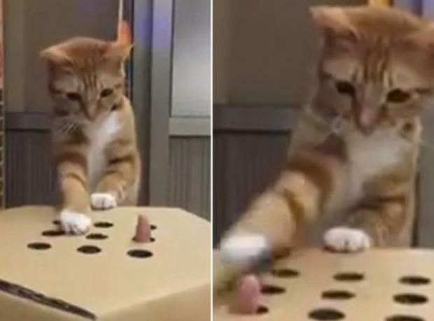 when cats are jerks