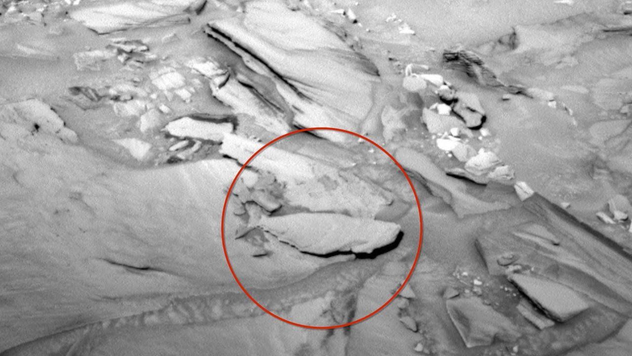 Mars'ta Balık Fosili mi Bulundu? | Karnaval.com